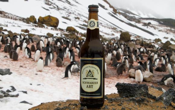 Der Schwarze Abt auf antarktischem Festland