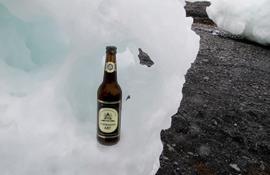 Schwarzer Abt auf antarktischem Eis